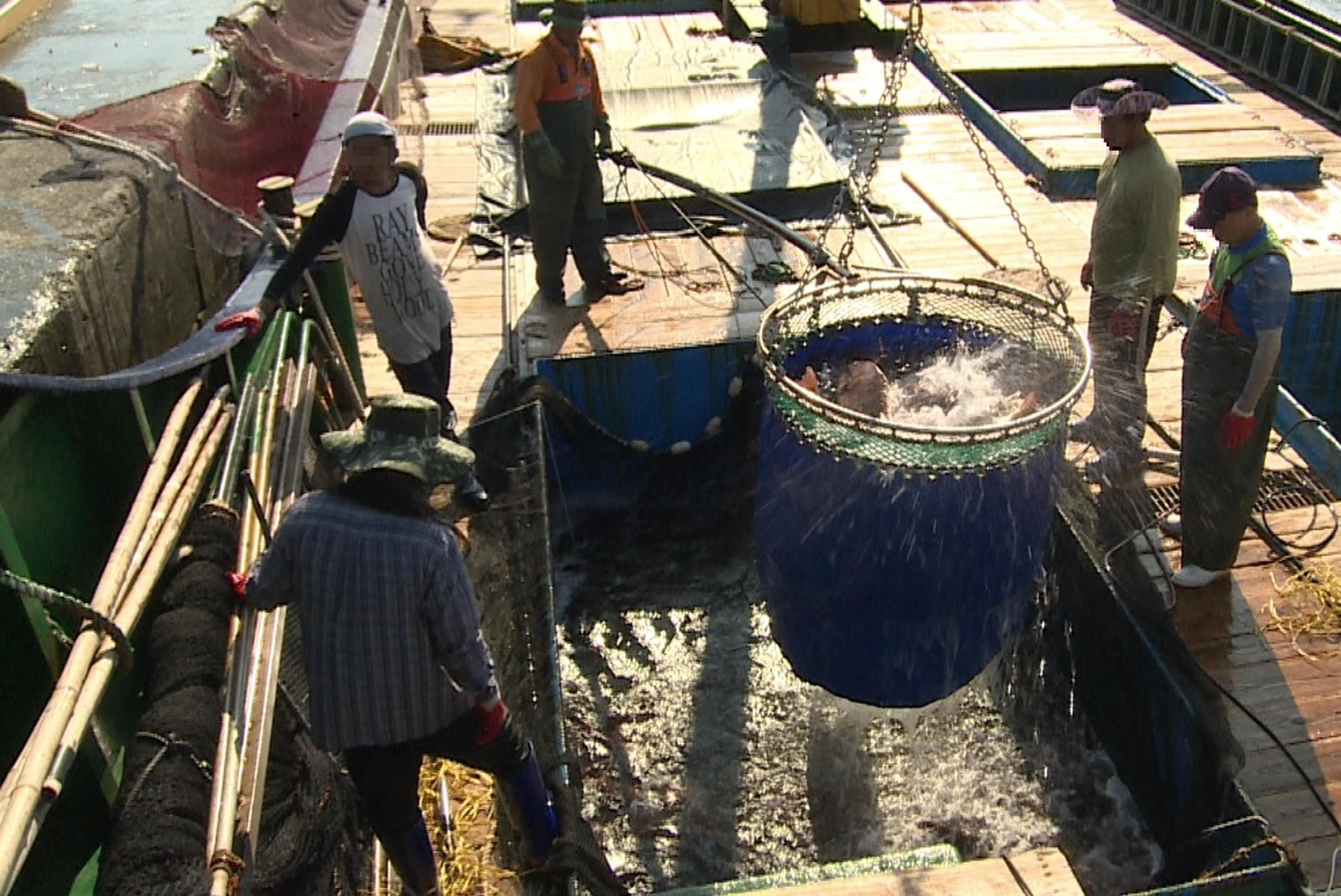 해수부, 일본 수입어류 검역완화 사실 숨겨