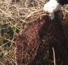 유명 섬마을 이장, 불법 폐기물 방치