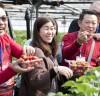 동남아시아 관광객, 통영 딸기농장 체험